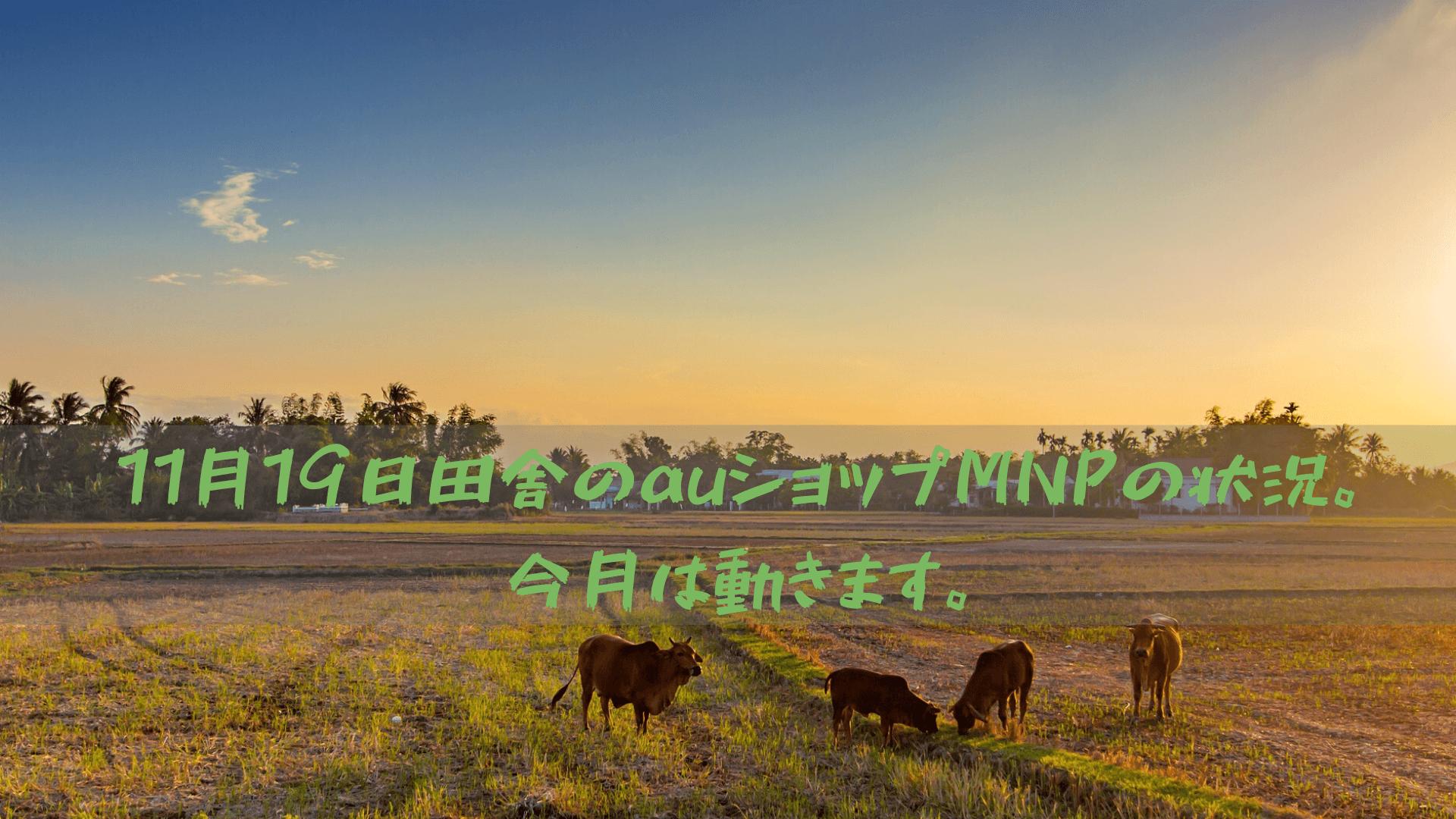 11月19日田舎のauショップMNPの状況。今月は動きます。